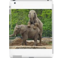 Elephants at Pittsburgh Zoo iPad Case/Skin