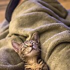 Lap Nap by Mikell Herrick