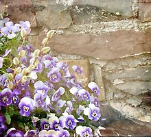 Pansies and Pussywillows by MotherNature