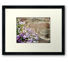 Pansies and Pussywillows Framed Print