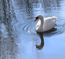 Swan And Ripples by Sally Green