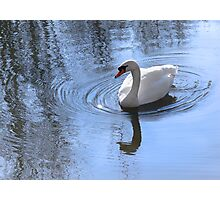 Swan And Ripples Photographic Print