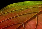 Leaf No4 by Sally Green