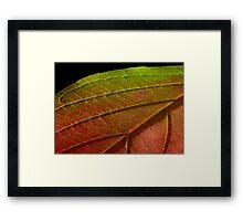 Leaf No4 Framed Print