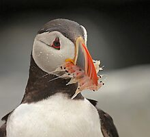 Puffin with Shrimp by Herbie