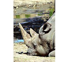 Rhino & Friend - Perth Zoo W.A. Photographic Print