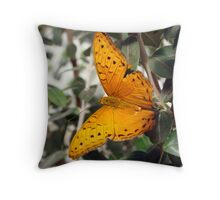 Vindula arsinoe Butterfly - Quindalup Butterfly & Fauna Park W.A. Throw Pillow