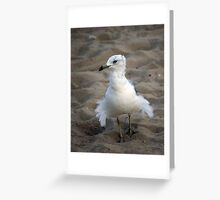 "--""Fluff-the seagull Greeting Card"