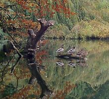 A Couple of Couples (Ducks at Witley)  by CreativeEm