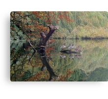 A Couple of Couples (Ducks at Witley)  Metal Print