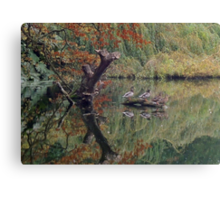 A Couple of Couples (Ducks at Witley)  Canvas Print
