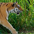 Aggressive Beauty by Jim Caldwell