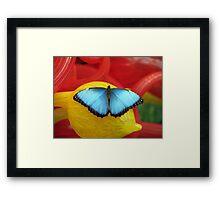Common Blue Morpho Butterfly Framed Print
