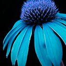 Blue Power by Pamela Hubbard