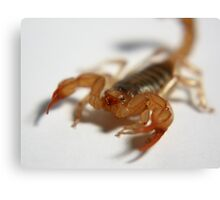 Household  Scorpion Canvas Print