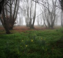 Daffodils in the chestnut grove by Robyn Lakeman