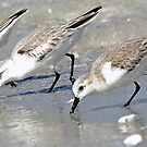Sandpipers by T.J. Martin