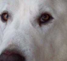 Great Pyrenees Dog Sticker