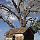 Old Farm Cabin by David  Postgate