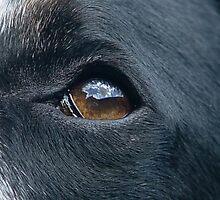 Dog Eye by shane22