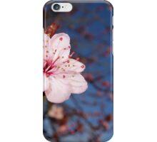 Single Cherry Blossom iPhone Case/Skin