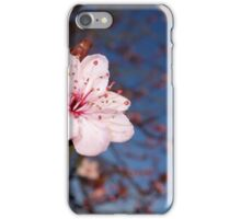 Single Cherry Blossom iPhone Case/Skin