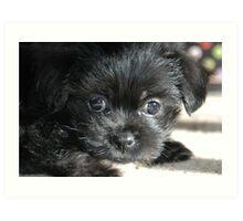 """Puppy Look"" Art Print"