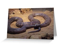 COLLETT'S SNAKE (PSEUDECHIS COLLETTI) Greeting Card