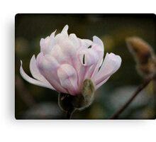 A textured Magnolia... Canvas Print