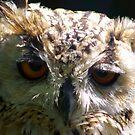 Sad Looking Eyes by Trevor Kersley
