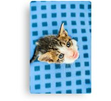 Kitten looking up Canvas Print