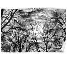 Sun, Clouds, and Winter Trees Poster