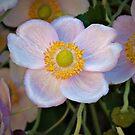 Anemone by PhotosByHealy