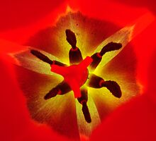 JOURNEY TO THE CENTER OF THE TULIP by Michael Beers
