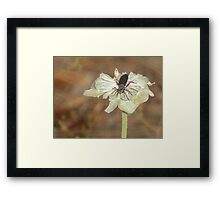 Dead Flower w / Insect Framed Print