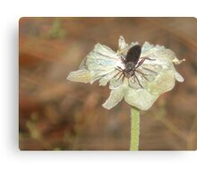 Dead Flower w / Insect Canvas Print