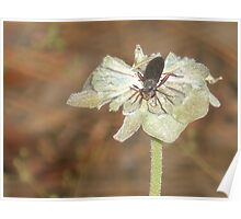 Dead Flower w / Insect Poster