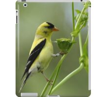Clinging Goldfinch iPad Case/Skin