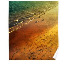 Seagulls at Sunset Poster