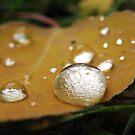Raindrops on a leaf by Tamara Brandy