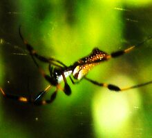 Banana Spider, Florida by Ryan Houston