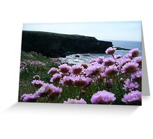Sea Pinks and Kilkee Cliffs Greeting Card