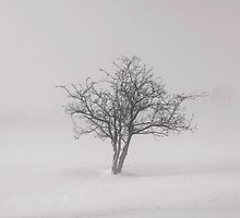The lonely tree by miradorpictures