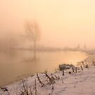 A misty dawn by miradorpictures