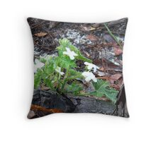 240 Throw Pillow