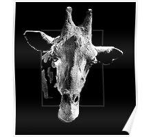 Giraffe through Glass Poster