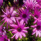 Purple bursts by Nikki Collier