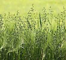 Shades Of Green by Debbie Oppermann
