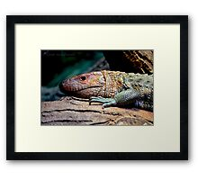 Dinosaur Reptile Photographic Print Framed Print