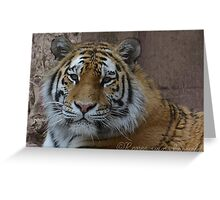 Fluff Tiger Photographic Print Greeting Card